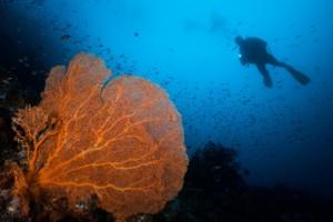 "JUARA 1 | Simon Chandra ""Big Seafans"""