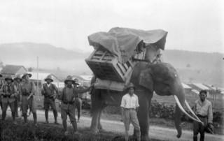 Kisah Raja Aceh dan Seribu Pasukan Gajaha